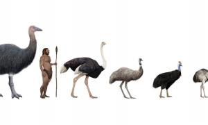 Pachystruthio dmanisensis, new species of giant bird has been discovered. Source: nicolasprimola / Adobe Stock.