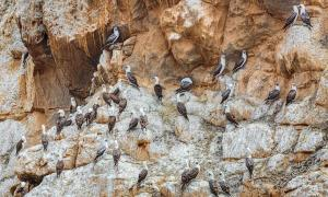 'White Gold' Seabird Guano Sustained Life in Ancient Atacama