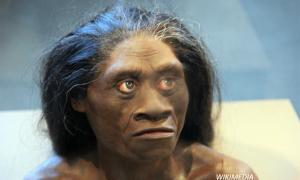"""Ancient """"Hobbit"""" Looked Like Humans"""