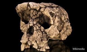 Hominids in Africa
