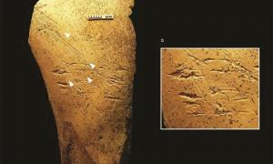 Archaeologists excavating in at the famous Boxgrove site in England have identified horse bone tools, the earliest bone tools ever discovered in the history of European archaeology. There are scraping marks due to the way the tool was