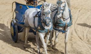 Roman chariot and horses. An ancient ritual horse burial has been discovered In Croatia. Source: Fernando Cortés / Adobe Stock.