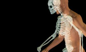 Human Body and Skeleton