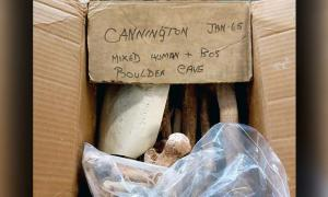 The box of Mesolithic bones were rediscovered at the Somerset Heritage Centre near Taunton.           Source: Cotswold Archaeology