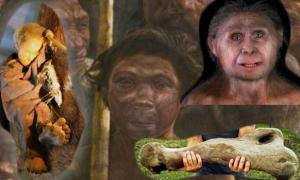 The best on human origins 2013