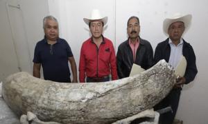Mammoth tusk found with the local residents who made the discovery.        Source: El Quito Medio