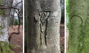 Examples of a king's mark, person, and witch mark carved into trees in the New Forest, Hampshire, England. Source: New Forest National Park