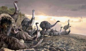 Giant elephant birds, once the largest birds in the world, may have coexisted with people for millennia.
