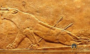 A lion is hunted, and is near death. Assyrian relief, Nineveh, north palace, 645-635 BCE