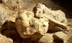 Detail of Little Foot's skull still in place in Sterkfontein Cave.