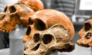 Million year human ancestors