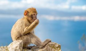 34 million-year-old monkey teeth found in Peru indicate they crossed the Atlantic from Africa.            Source: edojob / Adobe Stock