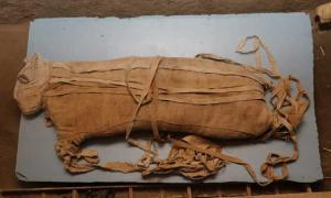 Mummified lion cub unearthed beneath the Saqqara necropolis. Credit: Ministry of Antiquities