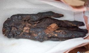 Operation Mummy's Curse Repatriates 2,800-Year-Old Mummified Hand That Had Been Used as Hollywood Prop