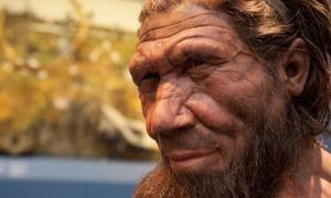 Neanderthal Reconstruction