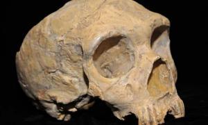 Prehistoric Indian Skull
