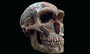 Neanderthals' Skull