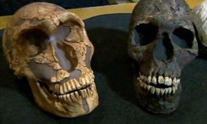 Neanderthals Big Eyes