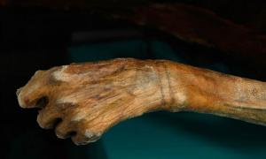 New tattoos on 5,300-year-old Otzi the Iceman mummy