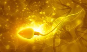 Scientists have found the world's oldest sperm cells. Source: bluebay2014 /Adobe Stock