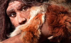 Evolutionary geneticists conducting a genome study have found that Neanderthals had a lower pain threshold than the majority of modern humans. Source: proct_ab / Adobe Stock