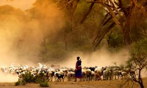 Ancient DNA shows movement and interactions encouraged by pastoralism in Africa. Source: kubikactive / Adobe Stock