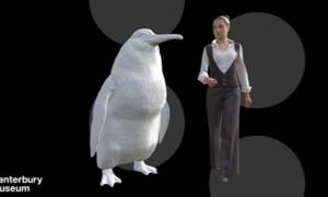 An illustration shows the approximate height of a giant penguin next to a woman. Source: Canterbury Museum