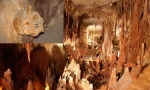 Petralona Cave - Greece