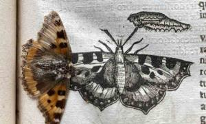 Preserved Butterfly Accidentally Found In a 390-year-old Insect Book