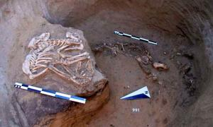 Harder to explain for the archeologists were the remains of animals in the pits.