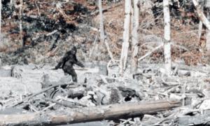 Sasquatch - Bigfoot