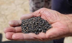 2,800-Year-Old Seeds Retrieved from Ancient Castle in Turkey to be Brought Back to Life