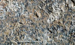 Detail of one of the semicircular engravings recently discovered and interpreted as a hut.
