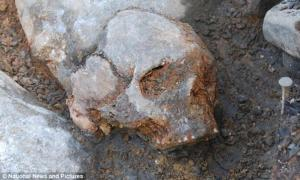 This skull was unearthed from a lake bed in central Sweden