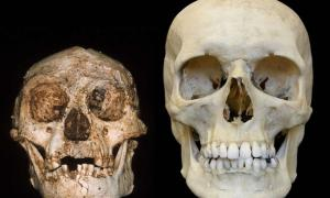 The toothy smiles of the hobbit skull (left) and a modern human skull (right).