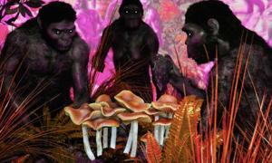 The Stoned Ape theory proposes magic mushrooms helped the Homo erectus evolve quickly.