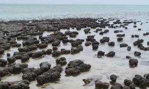 disappearance of stromatolites