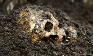 Trophy Skulls - Headhunters in London