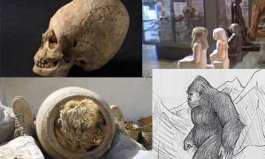 Unusual Discoveries 2013