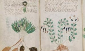 Mysterious Voynich manuscript  'genuine message'