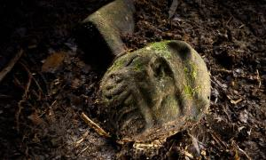 """A """"were-jaguar"""" effigy, likely representing a combination of a human and spirit animal, is part of a still-buried ceremonial seat, discovered in a cache in ruins deep in the Honduran jungle."""