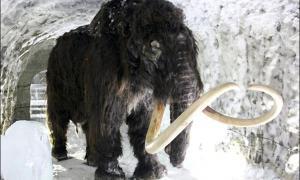 A woolly mammoth inside a permafrost cave in Yakutsk.