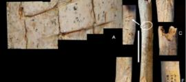 Cut marks observed on the femur of the Neanderthal child. Credit: M.D. Garralda et al.  Representational image only.