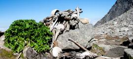 Human Skeletons at Roopkund Lake aka Skeleton Lake