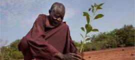 Yacouba Sawadogo planting.