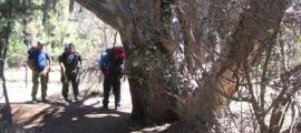 The US Forest Service fighting to save the ancient tree. Source: US Forest Service Tonto National Forest / Facebook.