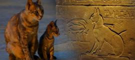 The Cat Came Back: A More Than Mythical History – Part I
