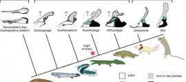 Fish hips human origins