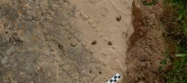Pattern of holes carved into ancient shelter in Azerbaijan are the remains of one of the world's oldest games.