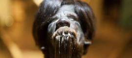 Shrunken Head at Cuenca Museum - Ecuador (Image: Ancient Origins)